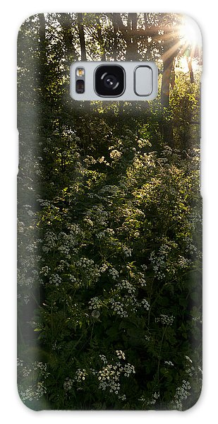 Queen Anne's Lace On The Woodland Floor Galaxy Case