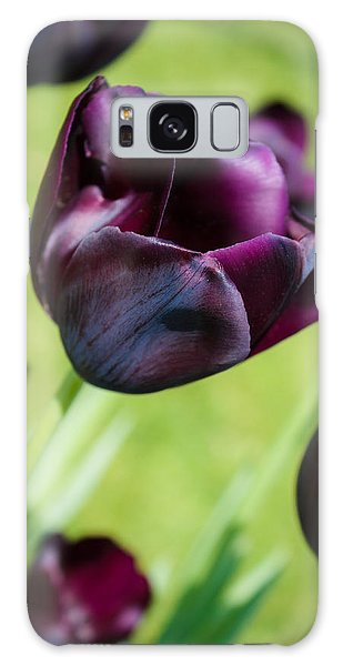 Queen Of The Night Black Tulips Galaxy Case