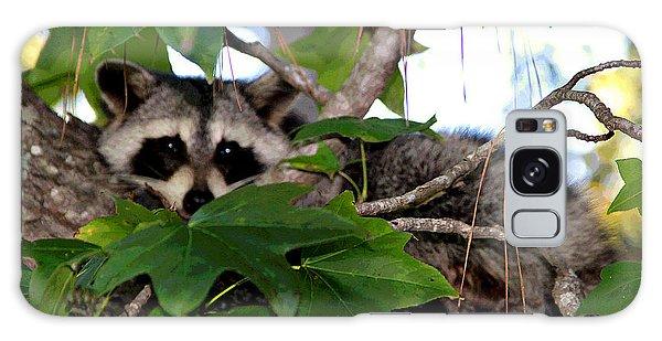 Raccoon Eyes Galaxy Case