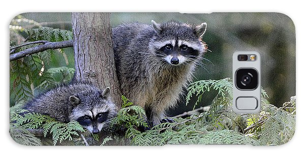 Raccoons In Stanley Park Galaxy Case