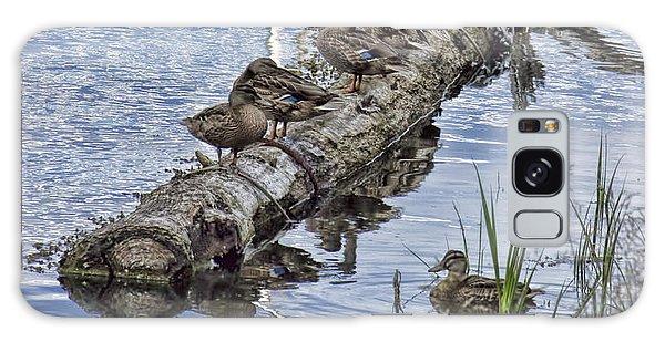 Raft Of Ducks Galaxy Case by Cathy Anderson