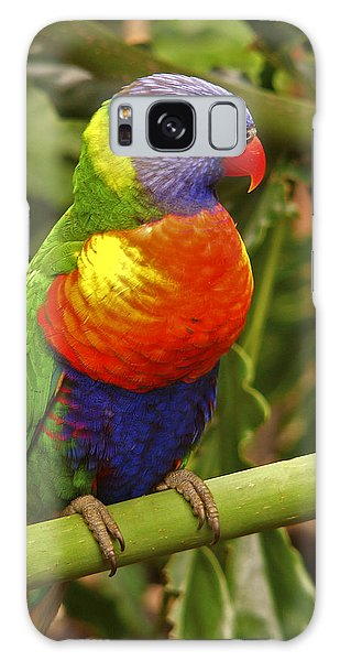 Rainbow Lorikeet.  Galaxy Case