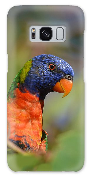 Rainbow Lorikeet Parrot  Galaxy Case
