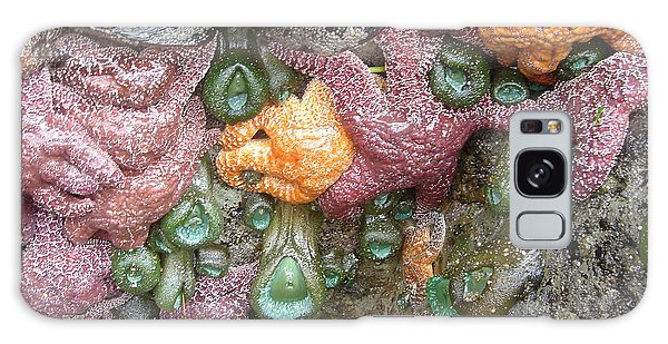 Rainbow Of Sea Creatures Galaxy Case