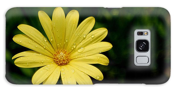 Raindrops And Daisy Galaxy Case by Living Color Photography Lorraine Lynch