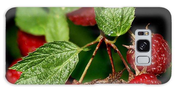 Raspberries Galaxy Case by Nikolyn McDonald