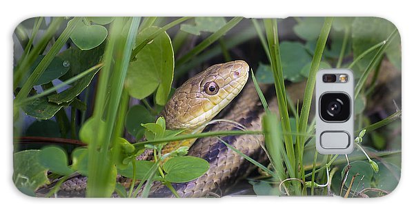 Grass Snake Galaxy Case - Ratsnake by Kenneth Albin