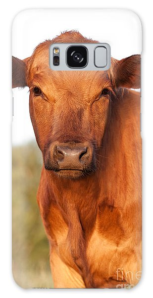 Red Angus Cow Galaxy Case