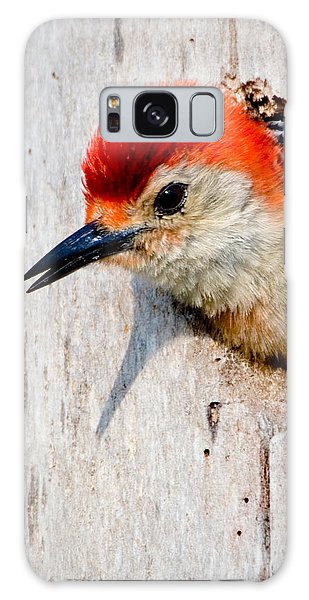 Red-bellied Woodpecker II Galaxy Case by William Beuther
