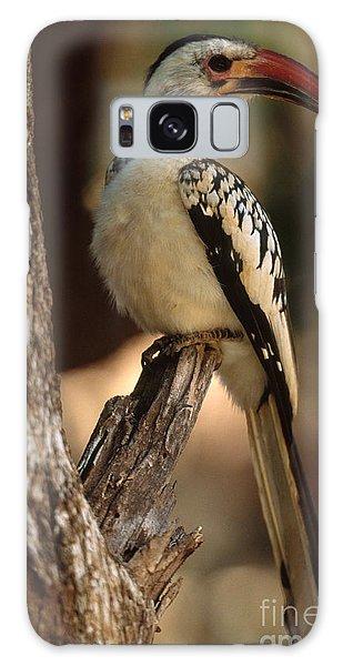 Red-billed Hornbill Galaxy Case by Art Wolfe