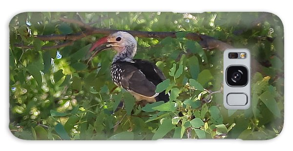 Red Billed Hornbill Galaxy Case