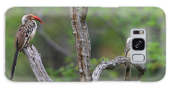 Red-billed Hornbills Galaxy Case by Bruce J Robinson
