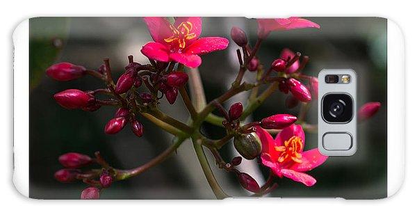 Red Jatropha Blossoms Galaxy Case