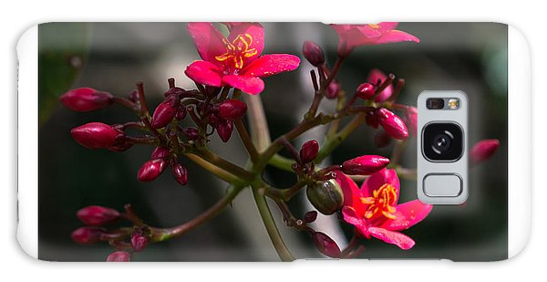Red Jatropha Blossoms Galaxy Case