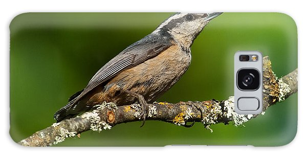 Red Breasted Nuthatch In A Tree Galaxy Case