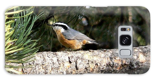 Red-breasted Nuthatch In Pine Tree Galaxy Case