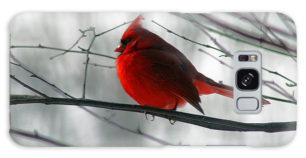 Red Cardinal On Winter Branch  Galaxy Case