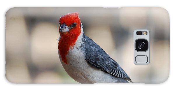 Red Crested Cardinal Galaxy Case by DejaVu Designs