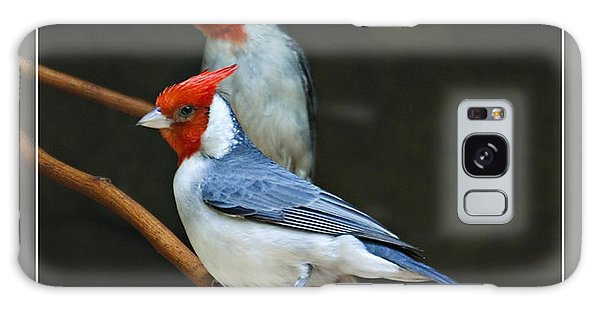 Red-crested Cardinal Galaxy Case