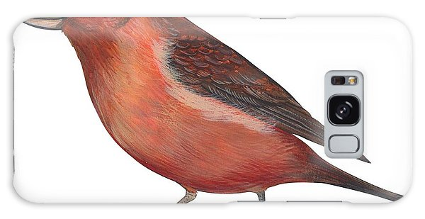 Red Crossbill Galaxy Case by Anonymous