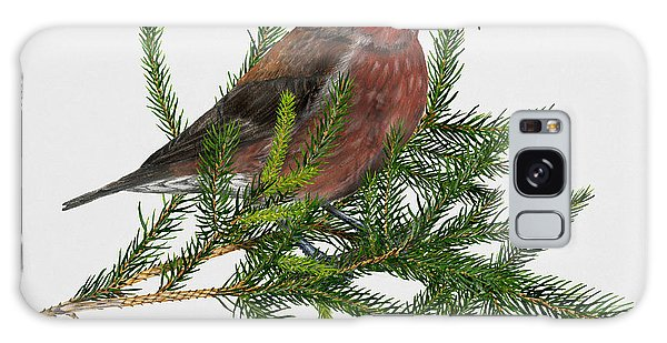 Red Crossbill -common Crossbill Loxia Curvirostra -bec-crois Des Sapins -piquituerto -krossnefur  Galaxy S8 Case