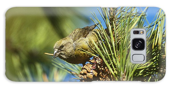 Red Crossbill Eating Cone Seeds Galaxy Case