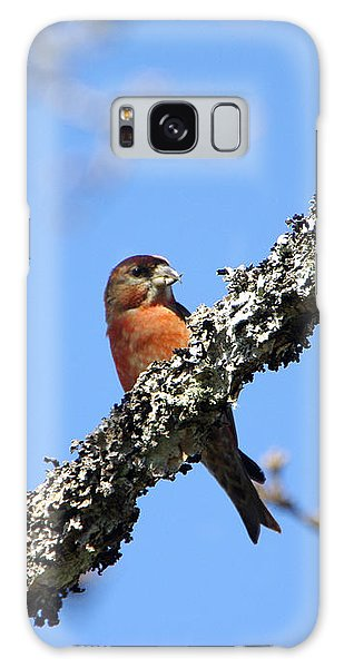 Red Crossbill Finch Galaxy Case