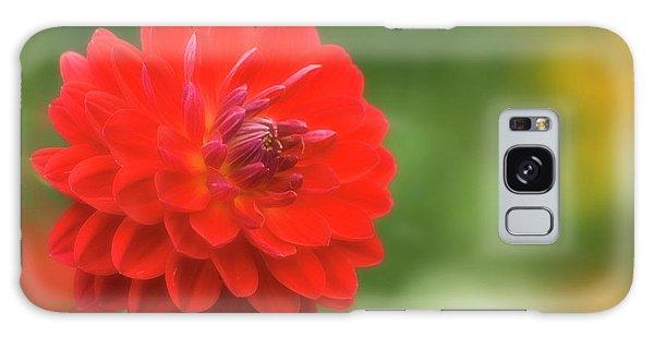 Hybrid Galaxy Case - Red Dahlia (dahlia Sp.) by Maria Mosolova/science Photo Library
