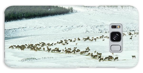 Cairngorms National Park Galaxy Case - Red Deer by Duncan Shaw/science Photo Library