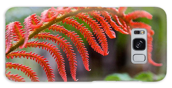 Autumn Fern In Hawaii Galaxy Case by Venetia Featherstone-Witty