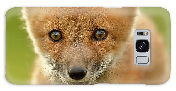 Furry Galaxy S8 Case - Red Fox Cub by Assaf Gavra