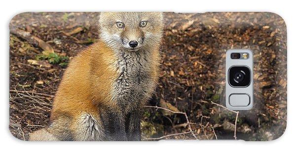Sly Galaxy Case - Red Fox Kit-posing by John Vose