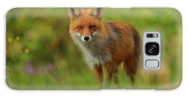 Sweden Galaxy Case - Red Fox Lady by Assaf Gavra
