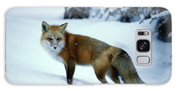 Sly Galaxy Case - Red Fox Vulpes Vulpes In Winter Snow by Animal Images