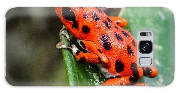 Red Frog Beach Galaxy Case