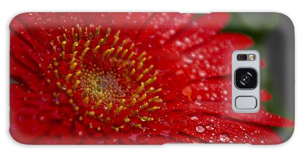 Red Gerber In The Rain Galaxy Case by Shelly Gunderson