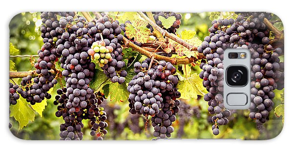 Red Grapes In Vineyard Galaxy Case