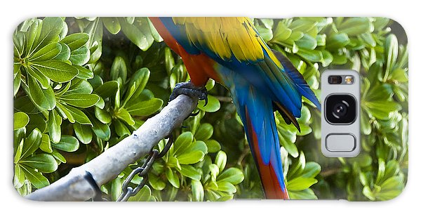 Red-green Macaw Galaxy Case