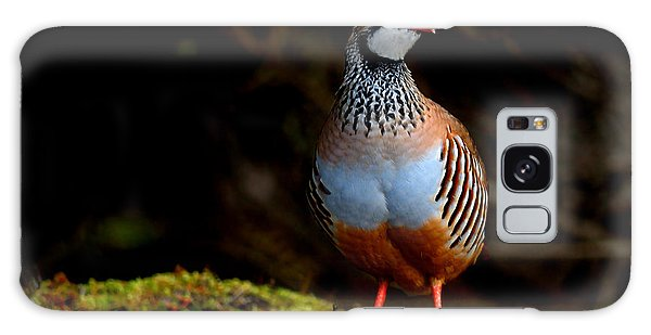 Red-legged Partridge Galaxy Case