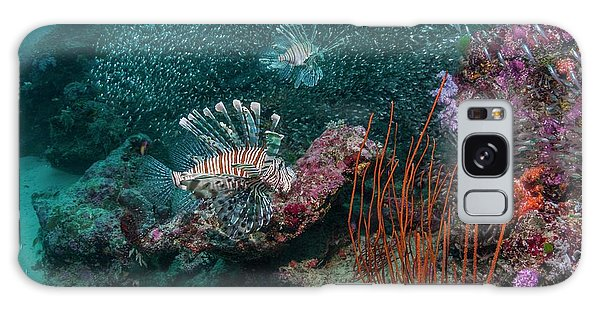 Hunting Island Galaxy Case - Red Lionfish Hunting Over A Coral Reef by Georgette Douwma
