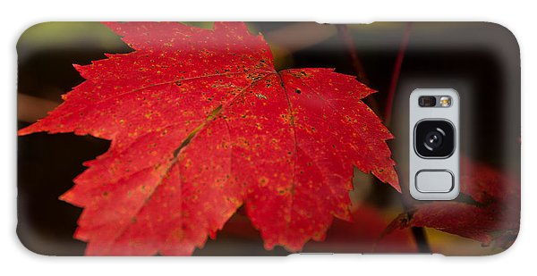 Red Maple Leaf In Fall Galaxy Case