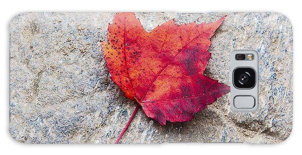 Red Maple Leaf On Granite Stone In A Square Format Galaxy Case by Karen Stephenson