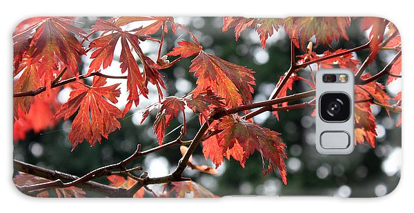Red Maple Leaves Galaxy Case