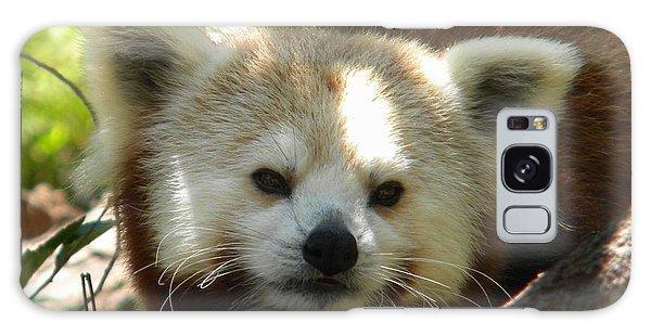 Red Panda Galaxy Case by Amanda Eberly-Kudamik