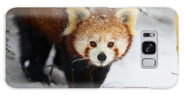 Red Panda In The Snow Galaxy Case
