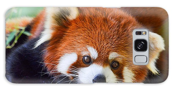 Galaxy Case featuring the photograph Red Panda by Michael Hubley