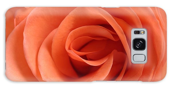 Red Rose Floribunda Closeup Galaxy Case