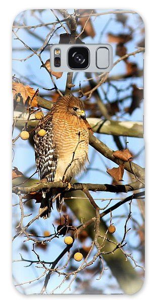 Red-shouldered Hawk - Img_7943 Galaxy Case