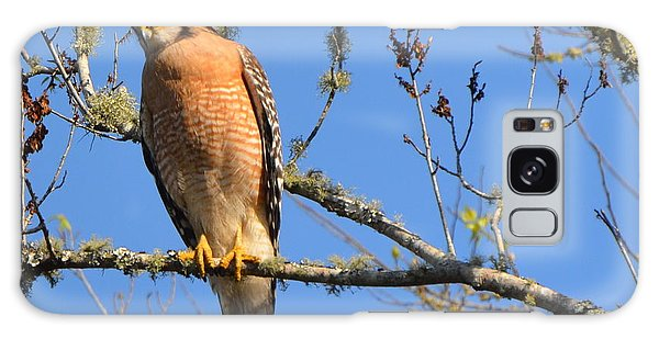 Red Shouldered Hawk Galaxy Case
