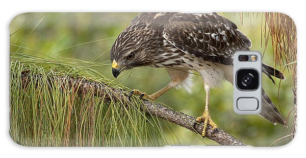 Red Shouldered Hawk Photo Galaxy Case by Meg Rousher